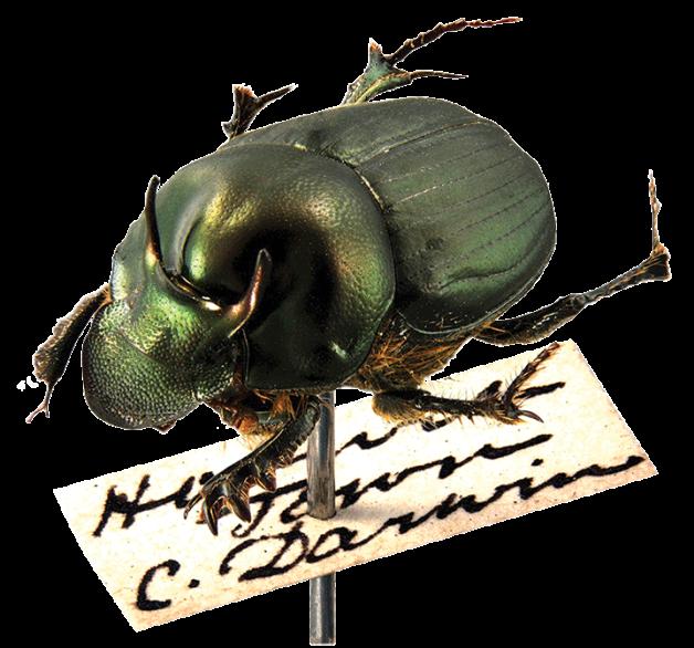 _Beetle-wpin