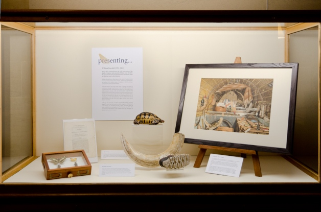Presenting... William Burchell display in the Museum