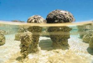 Modern day stromatolites in the Hamelin Pool Marine Nature Reserve, Shark Bay, Western Australia. Image from www.rockhounds.com.