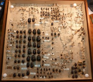 dung drawer