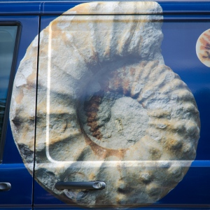 The ammonite on the van