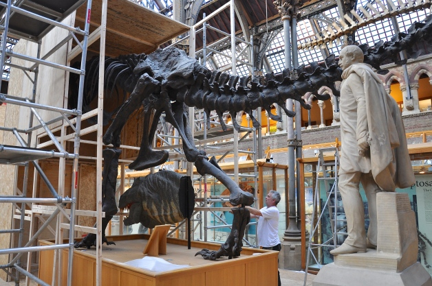 T rex being revealed Credit: Nicola Fielding