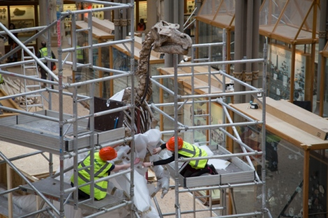 Museum staff unwrapping the Iguanodon